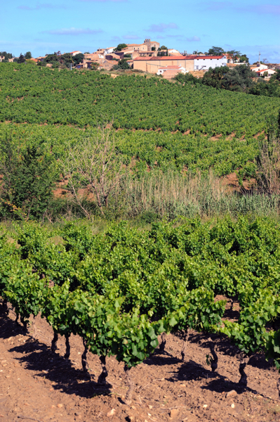 Vignes village1
